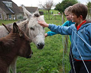 Donkeys at Margaret Green Animal Rescue